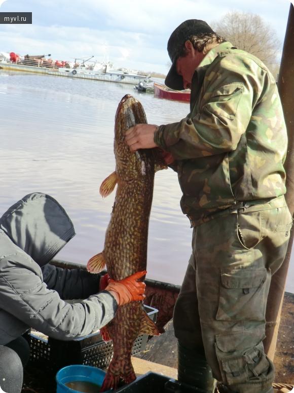 взвад рыболовная база